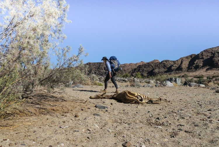 Female hiker walks past dead zebra corpse in desert Adventure Animal Arid Climate Backpack Backpacking Bag Dead Animal Desert Explore Hiker Hiking Landscape Let's Go. Together. Mountain Namibia Nature One Person Outdoor Photography Outdoors Rock - Object Travel Walking Wilderness Women Zebra