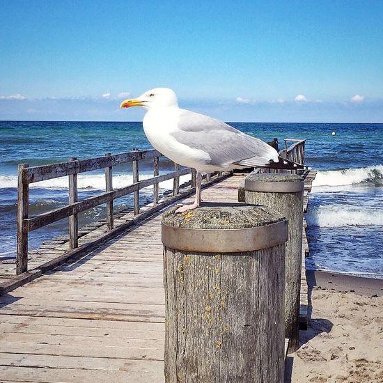 ☀️🌊 Beach Strand Möwe Ostsee Kühlungsborn Baltic Sea 2016 IPhoneography IPhone ShotOniPhone6