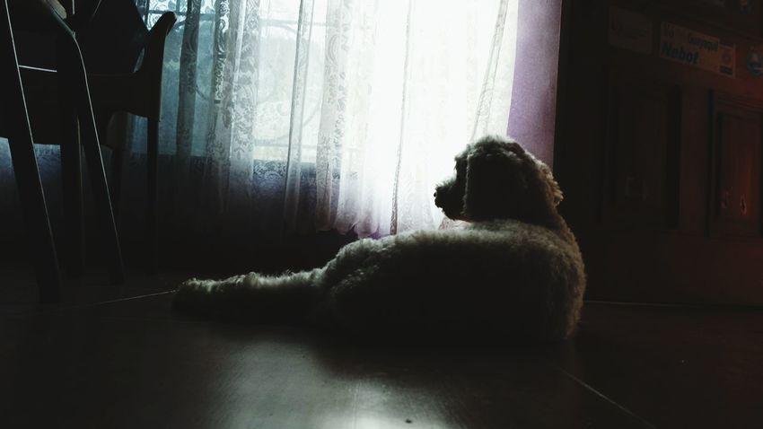 Pet Photography  Cute Pets Cute♡