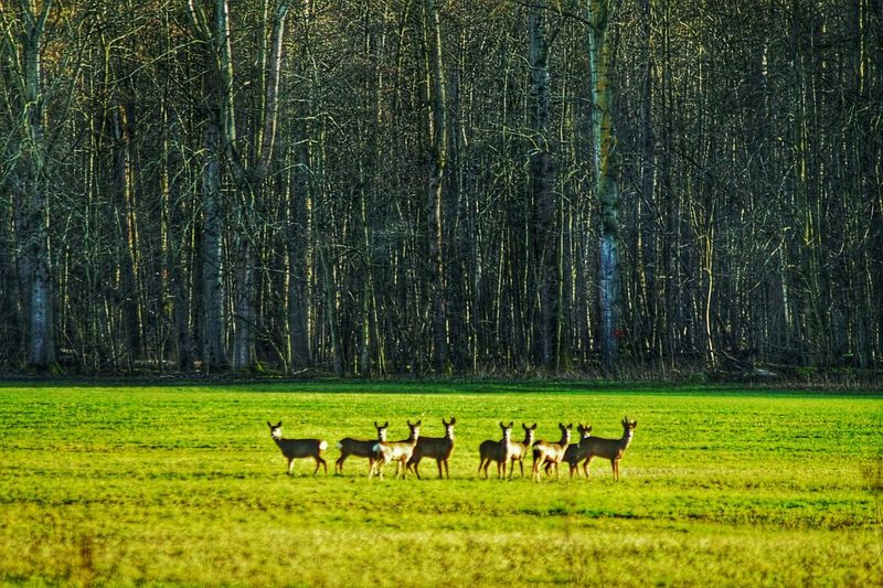 Deers Instinctive Vigilance Deers In A Clearing Out Of The Dark Forest Woods Peaceful Moment No Fear But Attention Nature Photography Nature On Your Doorstep Beauty In Nature Wild Animals Light And Shadows