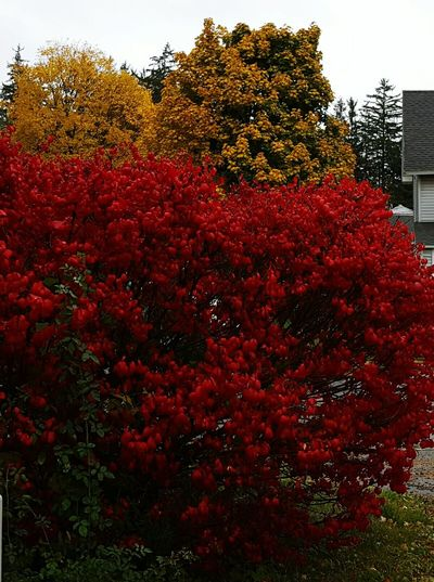 Red Growth Nature Plant Eyem School Color Contrast