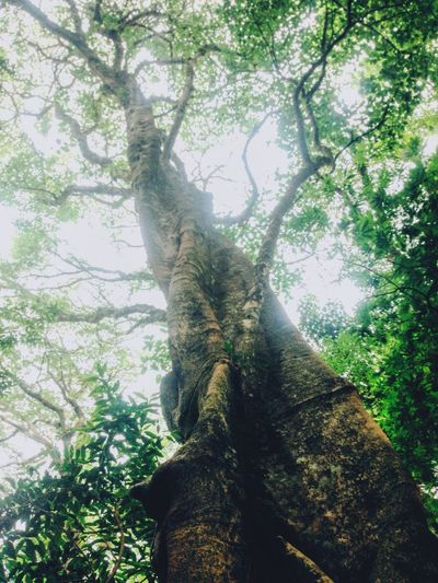 Tree Tall Beauty Nature Green Brown Wood Pretty Bosque De La Hoja Road Trip Sky Light Leave Forest Costa Rica