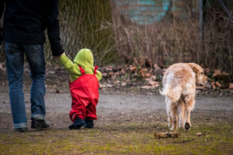 Low section of father holding hand of baby while walking with dog on footpath