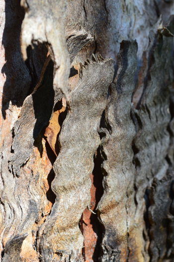 Backgrounds Bark Beauty In Nature Broken Bark Close-up Curled Edges Curly Curly Tree Bark Day Detail Focus On Foreground Full Frame Growth Natural Pattern Nature No People Outdoors Part Of Rough Selective Focus Sunshine And Shadows Textured  Tranquility Tree Bark Tree Trunk