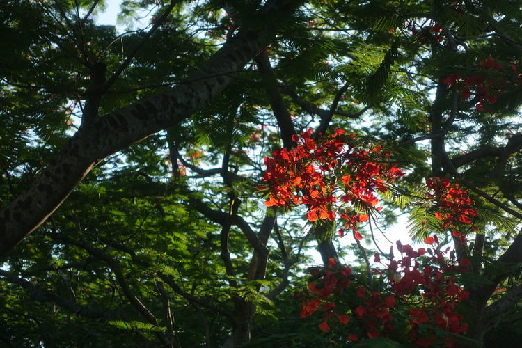 Tree Branch Flower Red Tree Trunk Plant Life Blossom