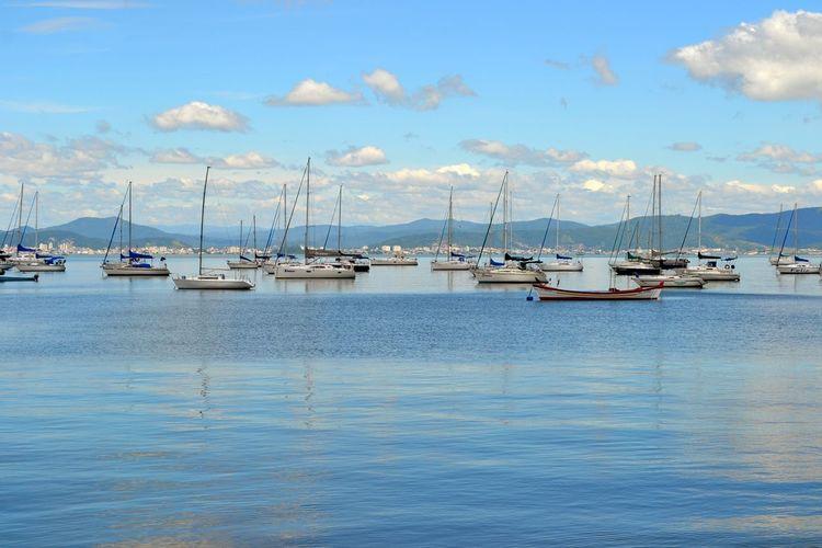 Sailboats Moored In Marina