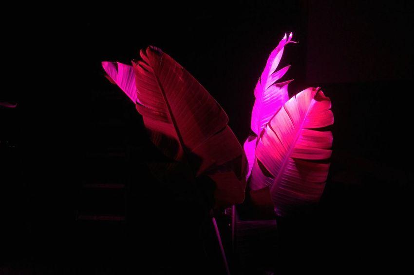 Night Plant Tropical Bar Brooklyn New York Diamond Reef