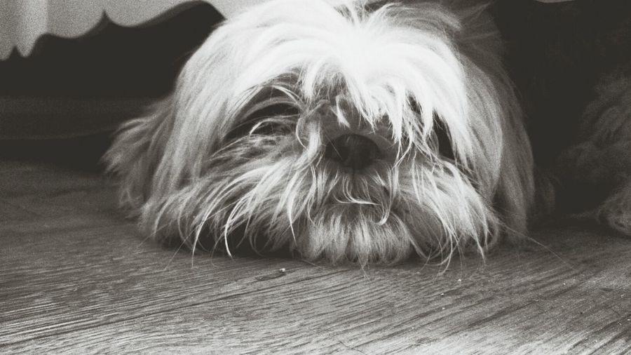 Darcie <3 Dogs