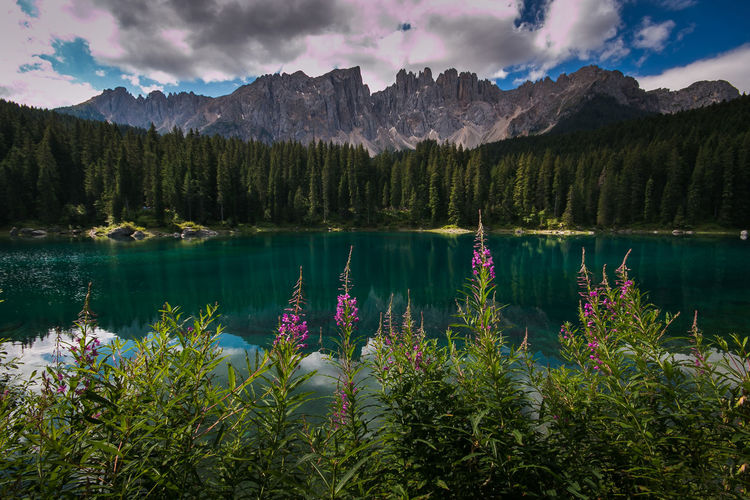 Carezza Lake or Karersee in Trentino Alto Adige, Italy with wonderful colors. the dense forests of firs and the mountains are reflected in its crystalline waters Desktop Dolomites Dolomites, Italy Lago Di Carezza Lago Di Carezza Trentino Dolomiti Nature Val D'Ega Beauty In Nature Card Cloud - Sky Idyllic Karersee Lake Landscape Latemar Mountain Mountain Range Nature Reflection Scenics - Nature Sky Tranquil Scene Wallpaper Water Wild Flowers