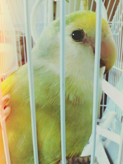 My parrot First Eyeem Photo