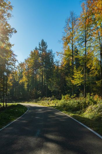 Tree Plant Road The Way Forward Direction Nature Growth Day Beauty In Nature No People Tranquil Scene Autumn Forest Green Color Outdoors Sunny Autumn colors
