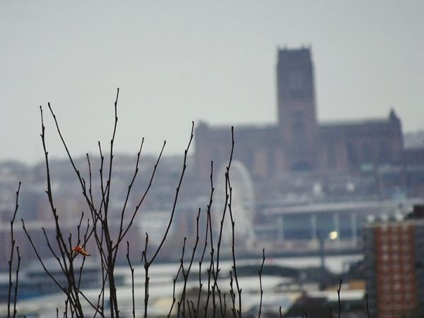 Distant view Liverpool City Urban Skyline Cathedral From Bidston Hill No People Outdoors Tranquility Autumn Colours Sky Beauty In Nature Growth Bare Tree Autumn Day
