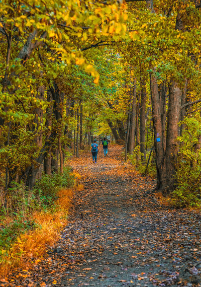 Mother and Child Walking Through Autumn Forest Autumn Beauty In Nature Change Footpath Forest Full Length Leaf Nature Outdoors Scenics Single Lane Road Tree Walking