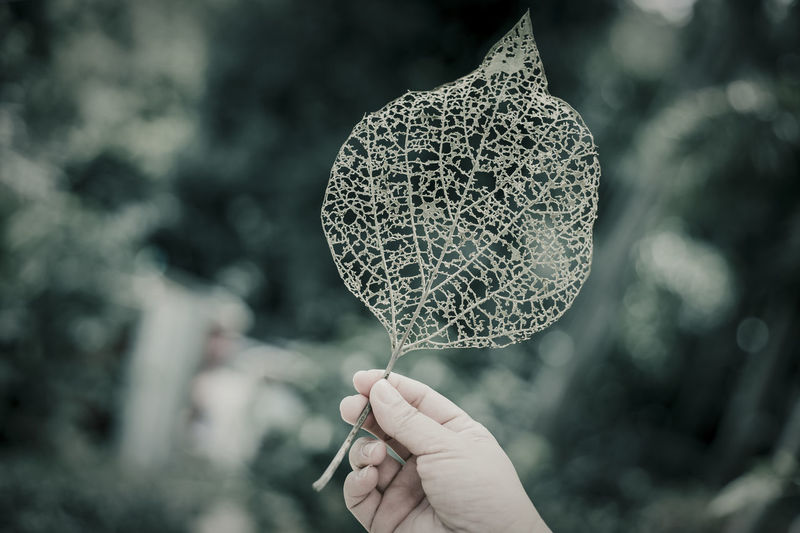 woman holding leaf with hole in it Body Part Close-up Day Finger Focus On Foreground Hand Holding Human Body Part Human Finger Human Hand Leaf Lifestyles Nature One Person Outdoors Personal Perspective Plant Plant Part Real People Unrecognizable Person