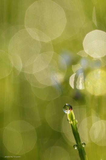太陽の恵みキラキラ~ Sony α♡Love Plants 🌱 Water Drops Depth Of Field EyeEm Nature Lover Macro Photography Getting Inspired Hello World *CHIE*