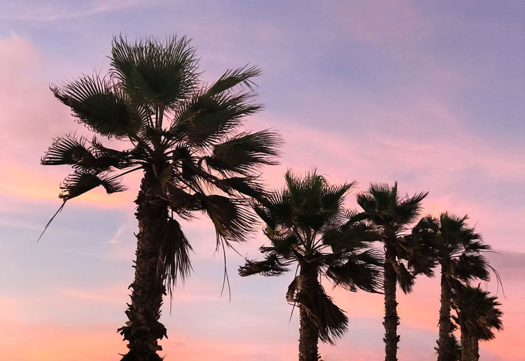 Nature Photography Sunset_collection Beauty In Nature Close-up Cloud - Sky Low Angle View Minimal Minimalobsession Nature Naturelovers Palm Tree Silhouette Sky Sunset Tree Wind Colour Your Horizn