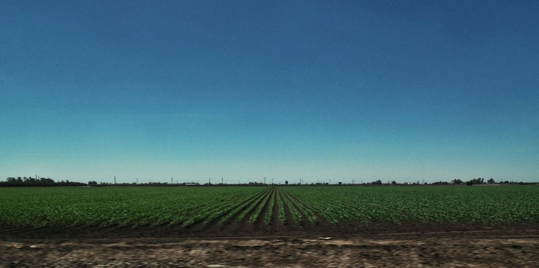 On the way outta town... On The Road Drive By Shooting Rural Scenes California Agriculture Fieldscape Blue Sky CentralValleyCA