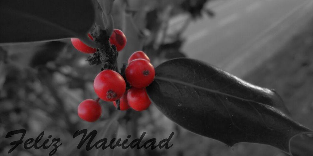 Christmas Color Navidad Natura Acebo