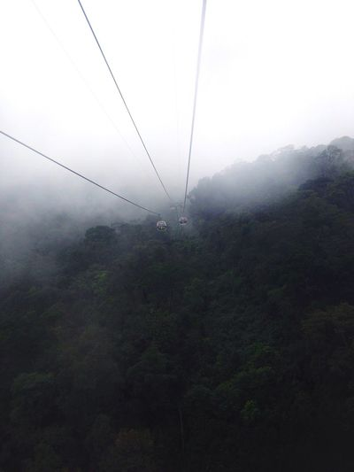 Tree Nature Fog Cable Scenics Beauty In Nature Outdoors Landscape Tranquility Mountain Power Line  Tranquil Scene Day Forest Growth Overhead Cable Car Sky Hazy  Electricity Pylon No People