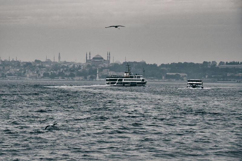 Istanbul view Water Nautical Vessel Mode Of Transportation Animal Themes Vertebrate Transportation Sky Waterfront Animal Animals In The Wild Animal Wildlife Bird Flying Nature Sea Day No People One Animal Building Exterior Outdoors Passenger Craft Istanbul Bosphorus Ferry