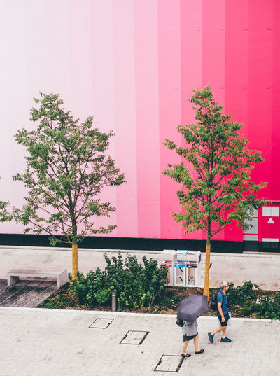 Which one is rose gold? Alone Architecture Built Structure Curtain Decoration Door Expo Expo2015 Expo2015milano Flower Pot Front Or Back Yard Fuji X100s FUJIFILM X100S Growth Hanging House Lifestyles Milan Milanexpo2015 Milano Pavilion Plant Postprocessing Potted Plant Summer Togetherness Tropical Climate Wall Wall - Building Feature Window X100S