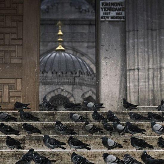 Eminönü Yenicamii askerleri... Pigeon Guvercin bird animal hayvan istanbul newmosque mosque ramazan ramadan cami