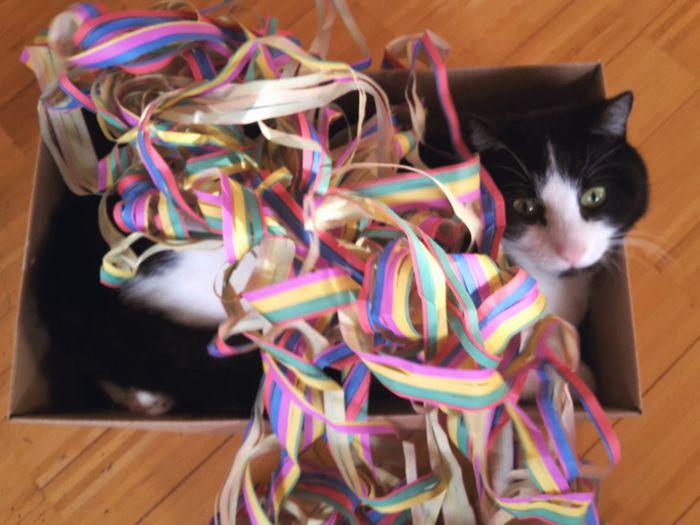 Carnival? My cat loves it! Cat Air Streamers Colorful Multicolored Color Blackandwhite Black And White Cute Curious Paperbox Pets One Animal No People Animal Themes Indoors  Multi Colored Portrait Domestic Animals Close-up Mammal Day Nobody Carnival Looking Into The Camera