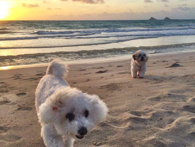 Dogs Enjoying Life Beach