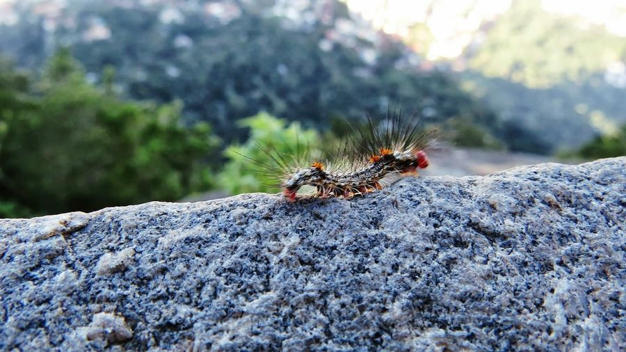 Animal Wildlife Insect Animals In The Wild Animal Themes Day No People Nature Outdoors Close-up Carterpillars