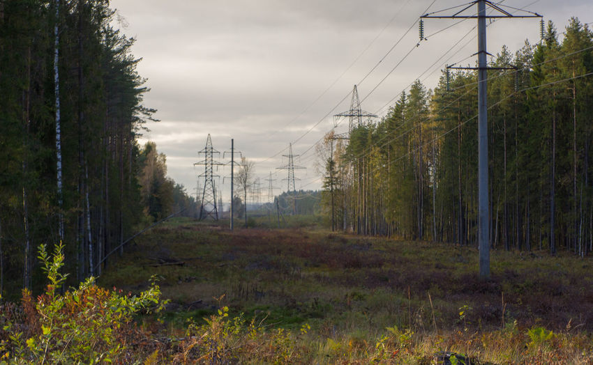 September evening Autumn Cable Day Electricity  Electricity Pylon Forest Grass Landscape Nature No People Outdoors Power Line  Power Supply Tree