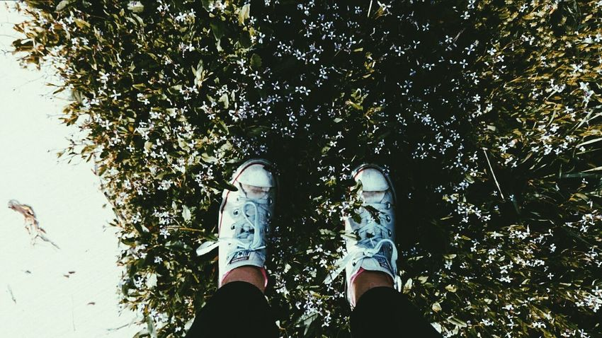 Shoe Low Section Human Leg Human Body Part Limb Standing One Person Personal Perspective People Day Outdoors Nature One Man Only Men Adult Tree Adults Only Only Men Close-up Young Adult EyeEmNewHere