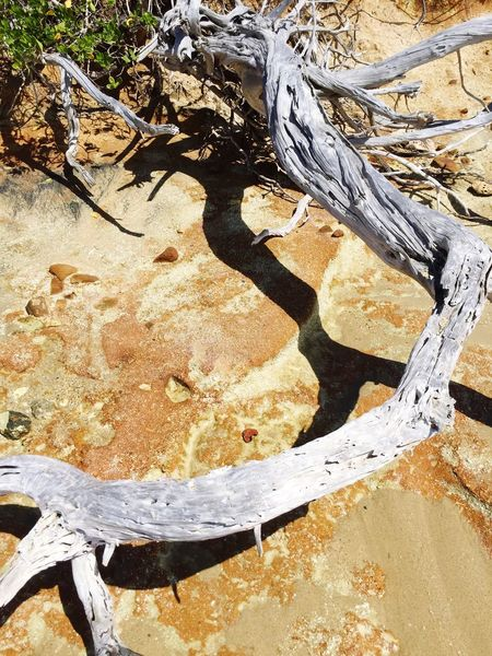 Driftwood Dried Beachphotography Sand Twisted Wood Silvered Weathered Weatheredwood