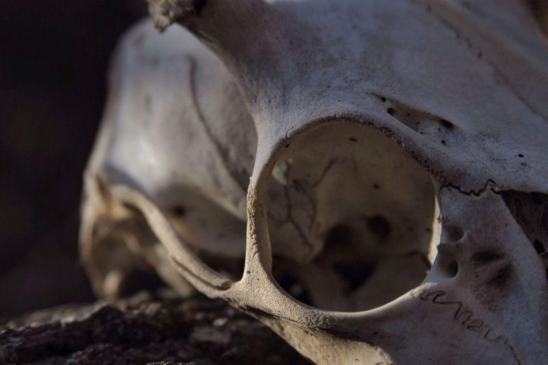 Bones Macro Nature