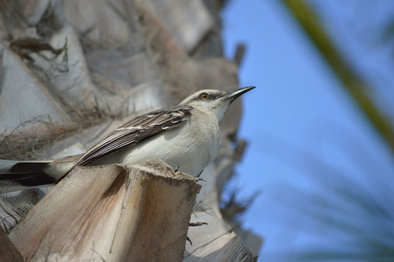Bird Vertebrate Animal Themes Animal Animal Wildlife Animals In The Wild One Animal Beauty In Nature Nature