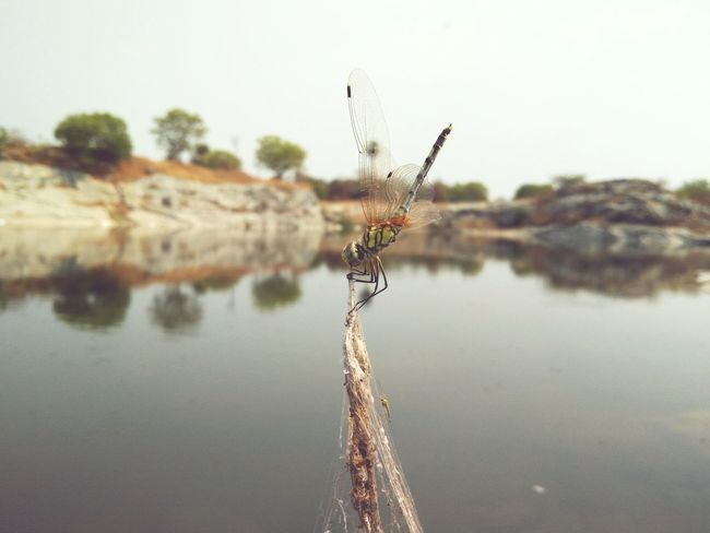 Dragonfly Eyeem Collection Dragonfly💛 Dragonfly Nature Insects