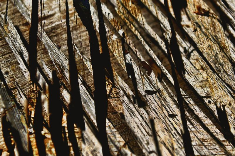 Cracks in wood. Full Frame Backgrounds No People Low Angle View Tree Pattern Close-up Nawfal Brown Background Multi Colored Wall Textures Urban Photography Textured  High Angle View Textured  Wood - Material Wooden Texture Circles In Concrete