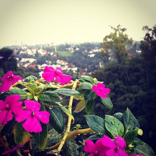 Beauty Interlomas Flower Sky Mx
