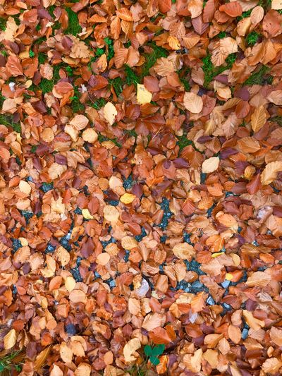 Blätter Blätter Weg Full Frame Backgrounds Day No People High Angle View Nature Abundance Leaf Large Group Of Objects Land Dry Leaves Plant Part Autumn Outdoors Change Pattern Brown Field Fragility