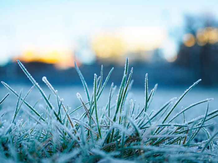 Selective focus shot of grass covered in hoarfrost