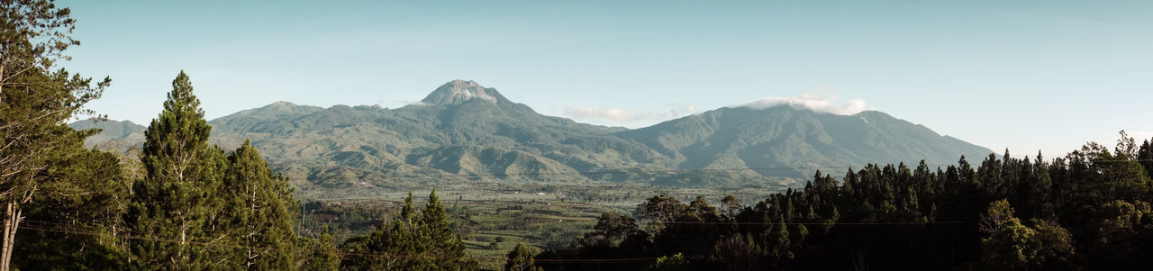 """Majestic Mt. Apo"" Mt. Apo Panoramic View Beauty In Nature Landscape Mountain Mountain Range Nature Outdoors Panoramic Photography Scenics Tree"