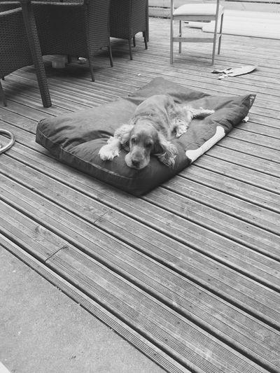 Hard pet life Dog Relaxation Pets One Animal