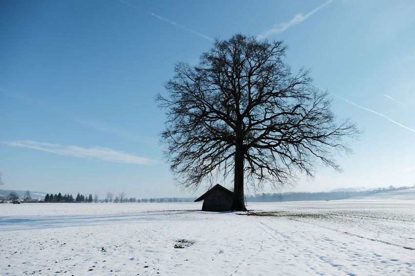 Beauty In Nature Cold Temperature Day Extreme Weather Frozen Knutwil Nature No People Outdoors Snow Switzerland Tree Winter