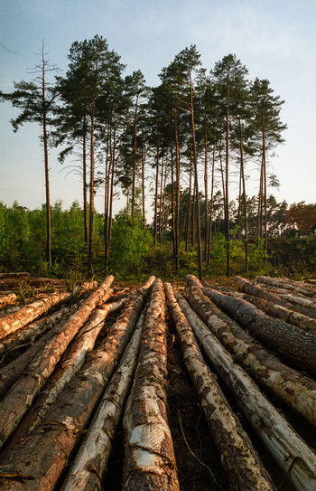 Block Clogs Cutting Cutting Trees Deforestation Deforestation Effect Deforestration Environment Environmental Damage Environmental Issues Forest Landscape Log Logs Lumber Industry Nature Nature No People No People, Outdoors Timber Tree Tree