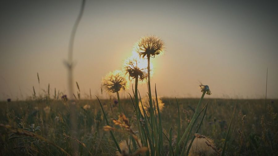Buryatia Beautiful Sunset Summer One Of Those Precious Moments Nature EyeEm Nature Lover EyeEm Gallery