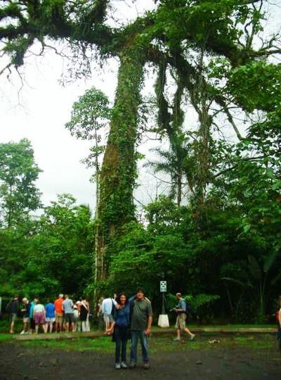 Costa Rica Arbol.