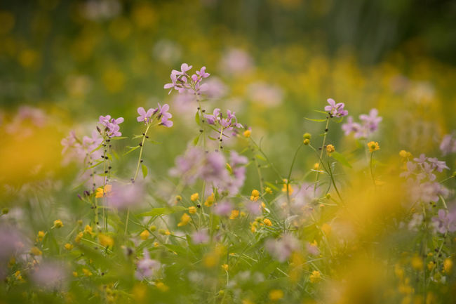 Spring flowers in a pasture. Beauty In Nature Blooming Close-up Day Flower Fragility Freshness Grass Growth Longlens Nature No People Outdoors Pasture Plant