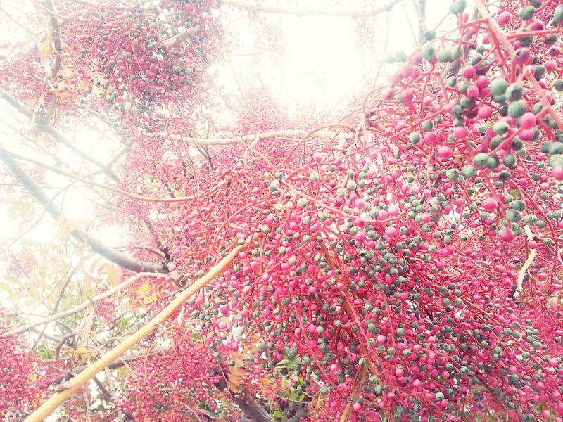 Peppercorns Fall Colors Colors Of Autumn