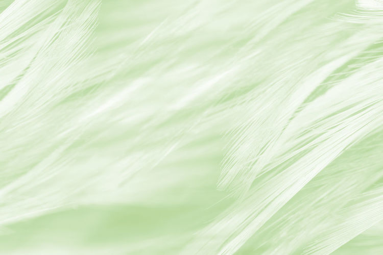 Backgrounds Green Color No People Plant Full Frame Close-up Nature Extreme Close-up Textured  Leaf Freshness Plant Part Beauty In Nature Growth Day Abstract White Color Food Food And Drink Vulnerability  Softness Abstract Backgrounds