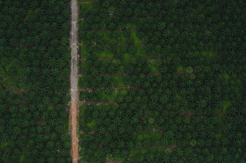 Aerial View Of Trees On Landscape