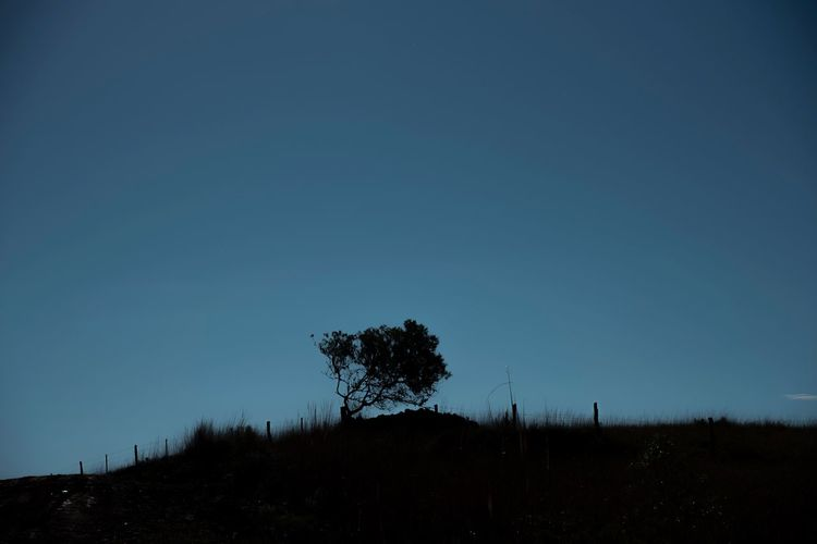 Silhouette trees on field against clear sky at night